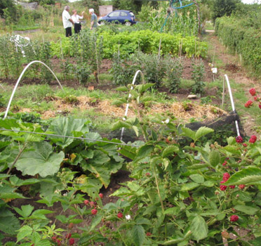 Gravel Lane Allotments
