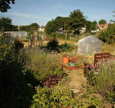 Limes Farm Allotments
